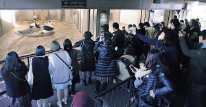 多くの観覧客がスマホでパンダを撮影していた(代表撮影)