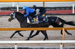 栗東CWコースの併せ馬で先着するキタサンブラック(左)