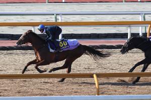 Mデムーロが乗り、CWコースで併せ馬に先着するスワーヴリチャード