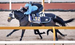 キタサンブラック(手前)は鋭い反応で半馬身抜け出してフィニッシュした