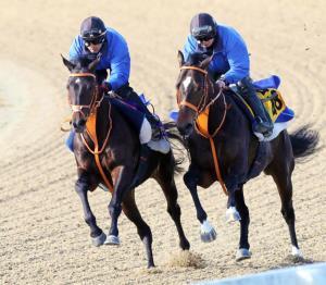 サトノクラウン(左)は併せ馬で先着。上昇気配は満点だ