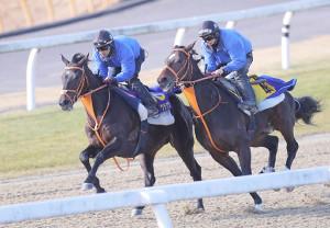 美浦ポリトラックコースで追い切ったサトノクラウン(左)