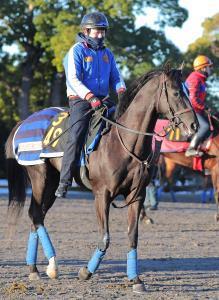 京都の馬場が合いそうな関東馬グローリーヴェイズ
