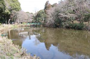 水鳥の姿が消えてしまった千葉・習志野市の森林公園
