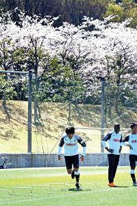 満開の桜の下、全体練習に取り組む中村(左)