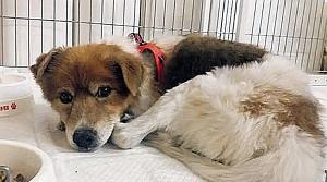 初めての保護犬ランディー