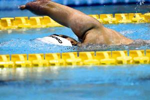 競泳・懸命に水をかいて進む男子選手(17年ジャパンパラ水泳競技大会)