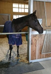 栗東トレセンの馬房で元気な姿を見せた