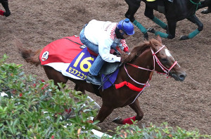 ルメール騎手を背に坂路で併せ馬で追い切るモズアスコット