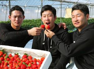 小園海斗(中)にいちごを食べさせる正随優弥(左)と島内颯太郎