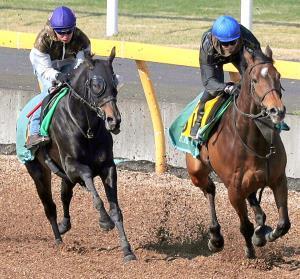 丸山が好感触を得たコントラチェック(左)の併せ馬