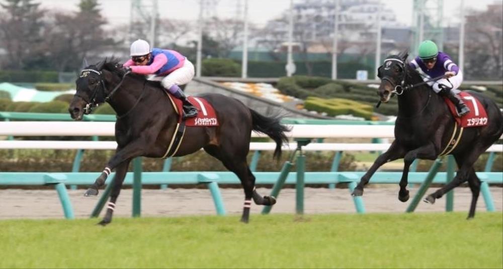 日経賞 2019【回顧】勝ち馬は当然、敗れた馬の中でも気になる馬 ...