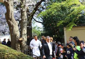靖国神社の桜の木の下から入場する藤波辰爾(先導するのは三又又三GM)