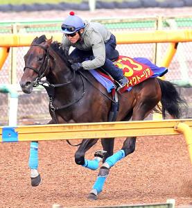戸崎騎手が騎乗し美浦Wコースで追い切ったウィクトーリア(カメラ・池内 雅彦)