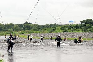 天然遡上豊かな相模川は人気河川だ