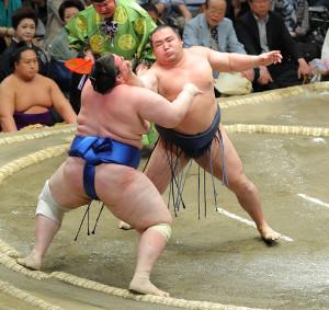 鶴竜(右)は碧山を寄り切りで下し5連勝(カメラ・森田 俊弥)