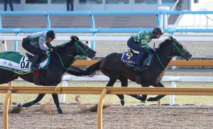 Cウッドで併せ馬で追い切るサートゥルナーリア(右)、タニノフランケル(左)