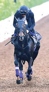 唯一の4歳馬エタリオウは活気十分に登坂