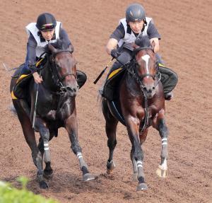 力強い脚さばきで先着したクレッシェンドラヴ(右)は本格化ムード