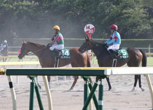 ミエノサクシード(左)とサラキア(カメラ・成海 晃)