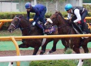 フィエールマン(左)は併せ馬で余力たっぷりの併入