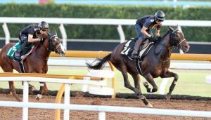 シゲルピンクダイヤ(右)は併走馬に悠々と3馬身差の先着