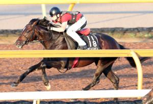 ビルドアップした馬体でCWコースを駆けたリオンリオン
