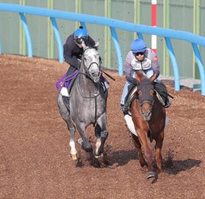 併せ馬で追い切りを行ったウインブライト(左)