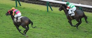 5Rで新馬勝ちのテイエムフローラ(13番)