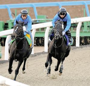 僚馬を6馬身追走したダノンキングリー(右)は余力残しで併入
