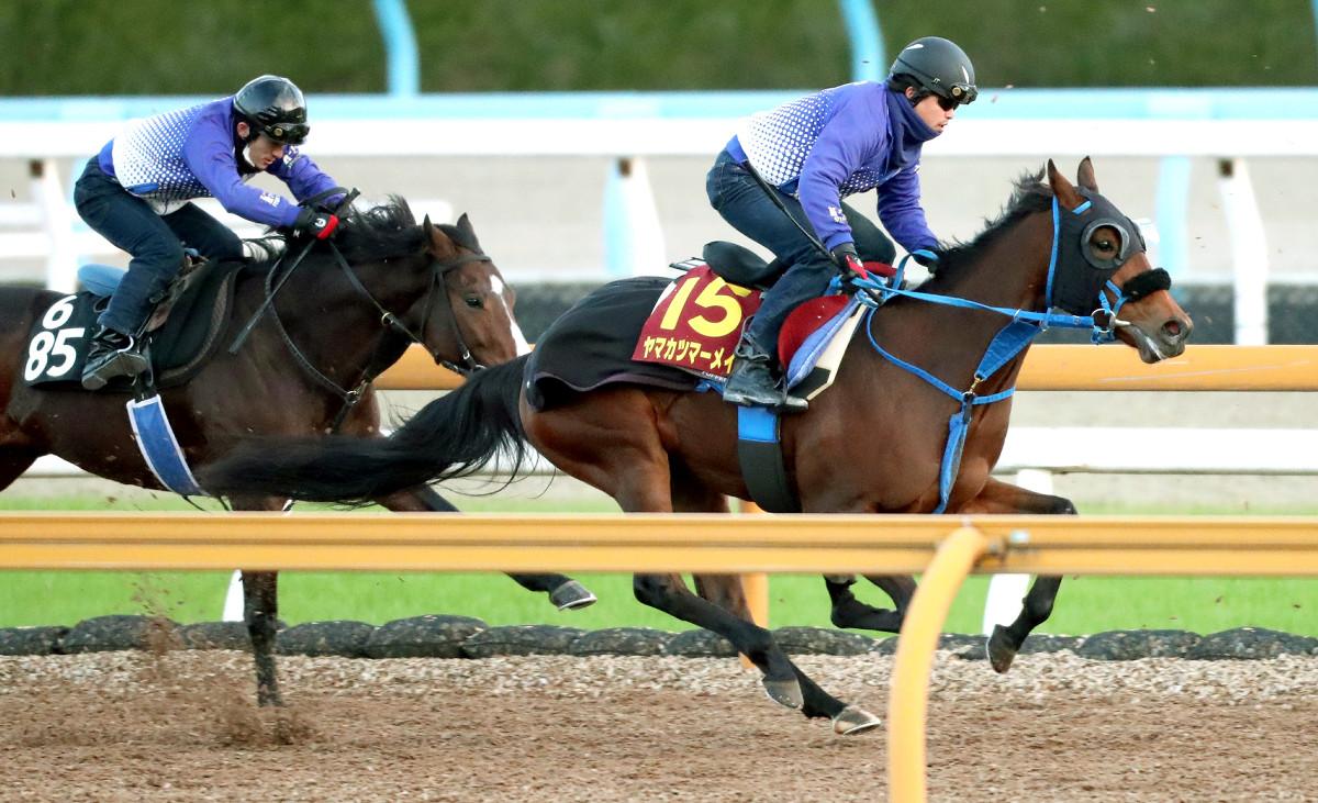 ヤマカツマーメイド(右)は併せ馬で1馬身先着