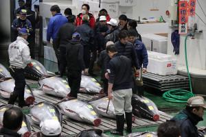 5日、豊洲市場で令和最初の初セリが行われた