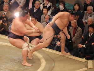 妙義龍(左)に押し出しで敗れた鶴竜
