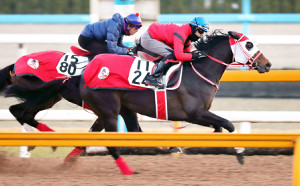 併せ馬で首差先着したタイセイトレイル(右)