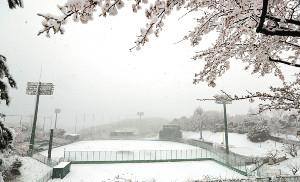 グラウンドに雪が積もったジャイアンツ球場(カメラ・宮崎 亮太)