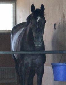宝塚記念で6馬身差圧勝したクロノジェネシス