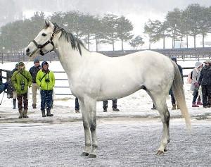 初年度産駒で中央勝ち馬を送り出したクリーンエコロジー