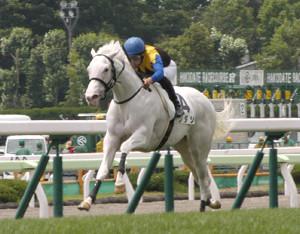 白毛で初めて芝の新馬戦を制したソダシ