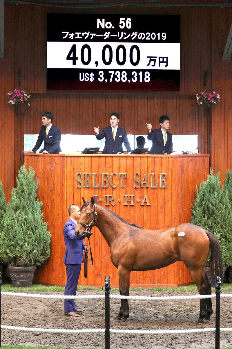 フォエヴァーダーリングの2019は4億円で落札された(c)Japan Racing Horse Association