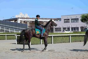 札幌競馬場に入厩した藤沢和厩舎のバッソプロフォンド