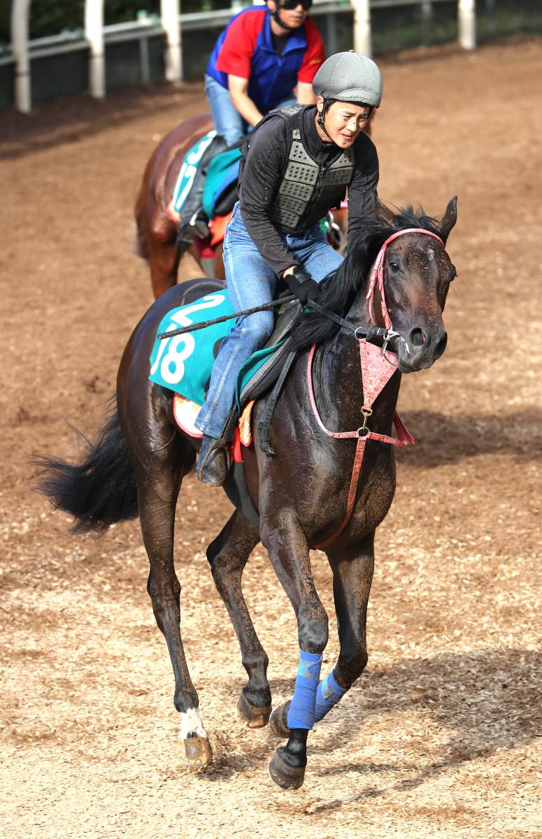 夏の小倉開幕初日のフェニックス賞に向けて調整されている九州産馬のヨカヨカ