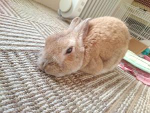 寺沢が幼少期に飼っていたウサギの「ラルキー」