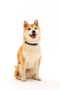 中川とバディーの犬「きぃ」