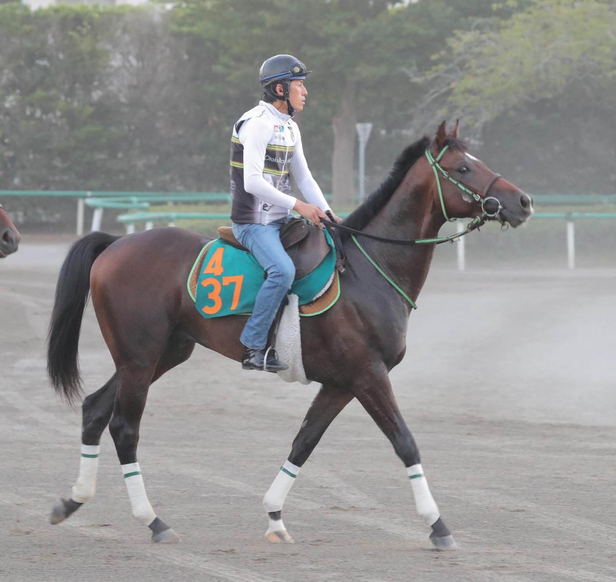 16日新潟5Rの新馬戦に出走するヴェイルネビュラ(カメラ・池内 雅彦)