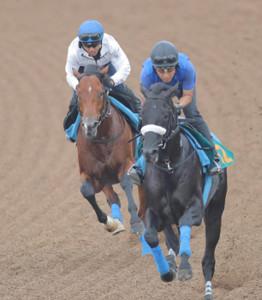 戸崎圭太騎手が騎乗しWコースで追い切ったサトノフラッグ(右はブルメンダール)