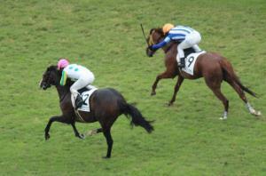 京都5R新馬戦でニホンピロマリブ(12番)が差し切って勝利、(9)は2着のフレイミングサン