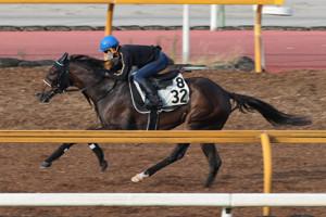 府中牝馬Sに出走するシゲルピンクダイヤ(カメラ・高橋 由二)