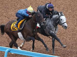 松岡騎手が騎乗しWコースで追い切ったウインブライト(右)