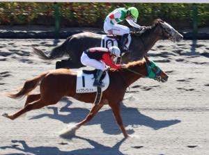 横山親子の壮絶な叩き合いとなった東京4Rは横山武騎乗のホワイトクロウ(奥)が勝利