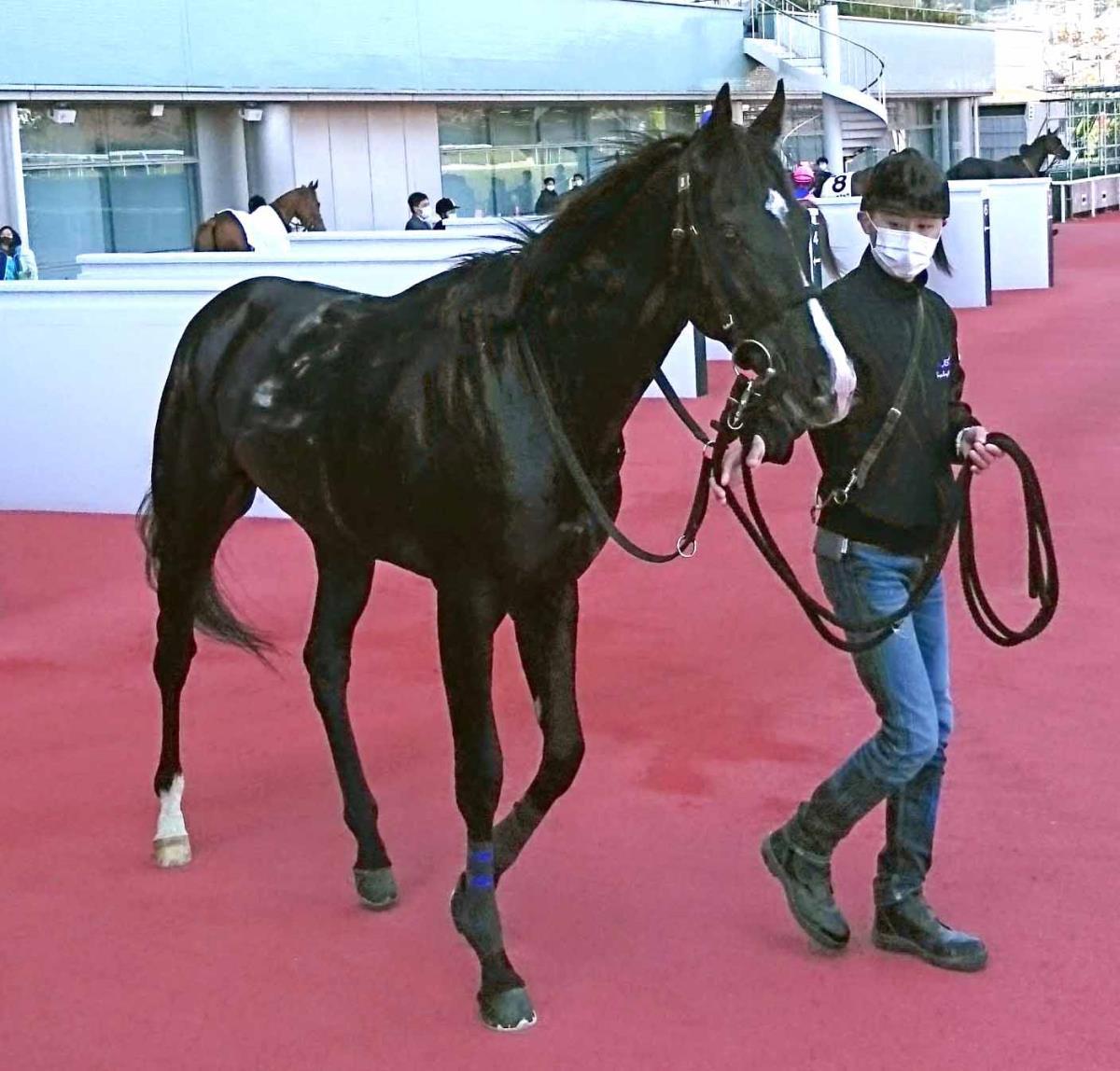 阪神5R新馬を勝ったレゾンドゥスリール
